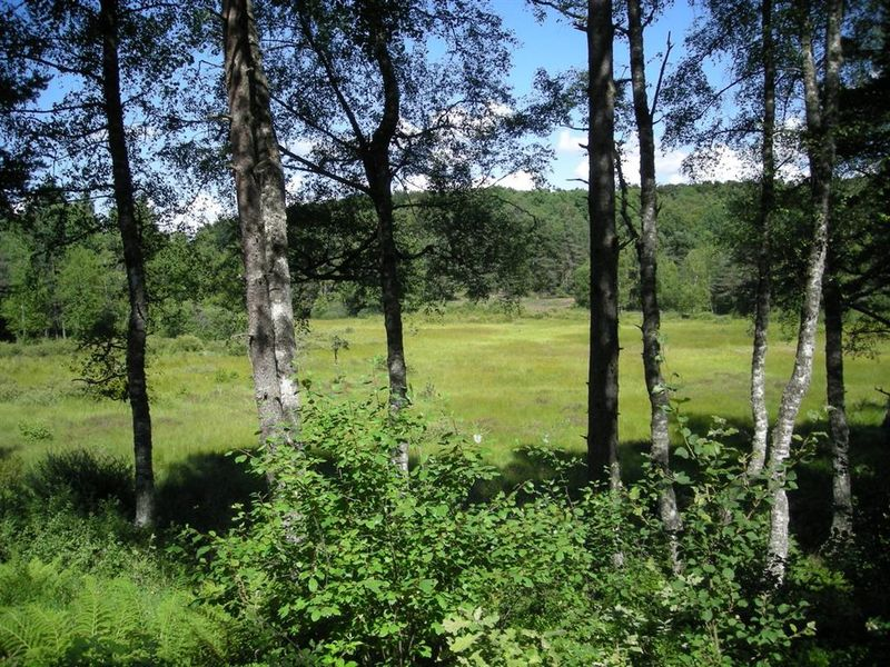"""Vergnes des Mazes"" peat bog – Nature trail-1"