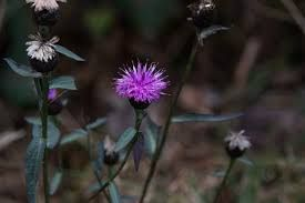 """Vergnes des Mazes"" peat bog – Nature trail-3"