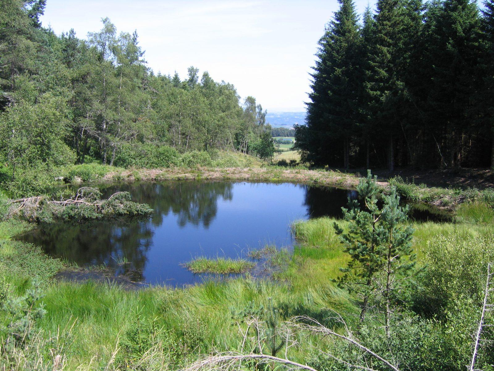 "Puy de la Tuile peak and ""apprenti botaniste"" discovery path-3"