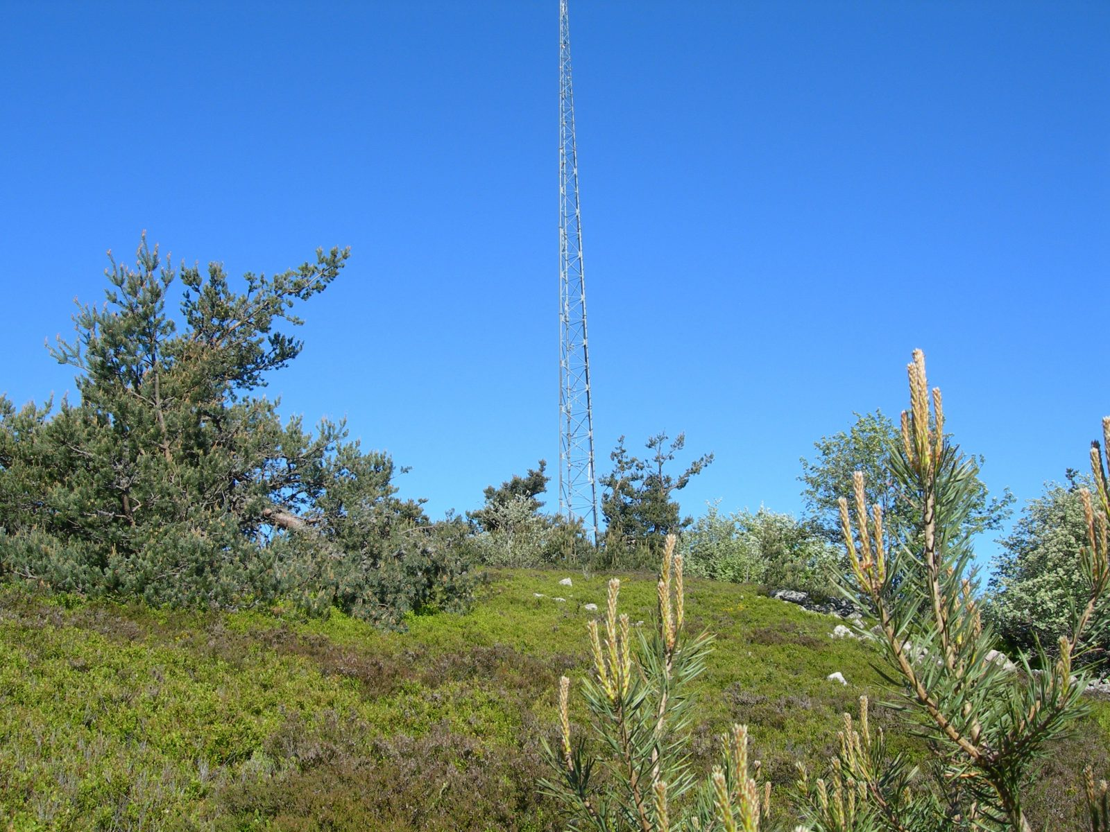 "Puy de la Tuile peak and ""apprenti botaniste"" discovery path-8"