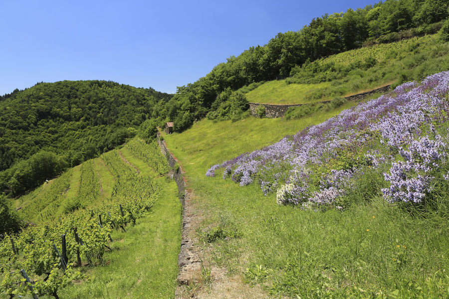 Gastronomie en vallée d'Alagnon-4