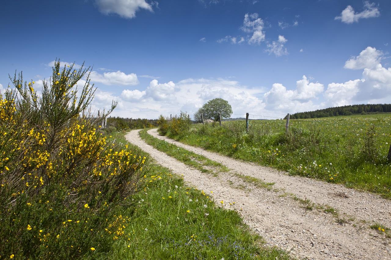 "Road trip ""Aubrac Cantalien""-8"