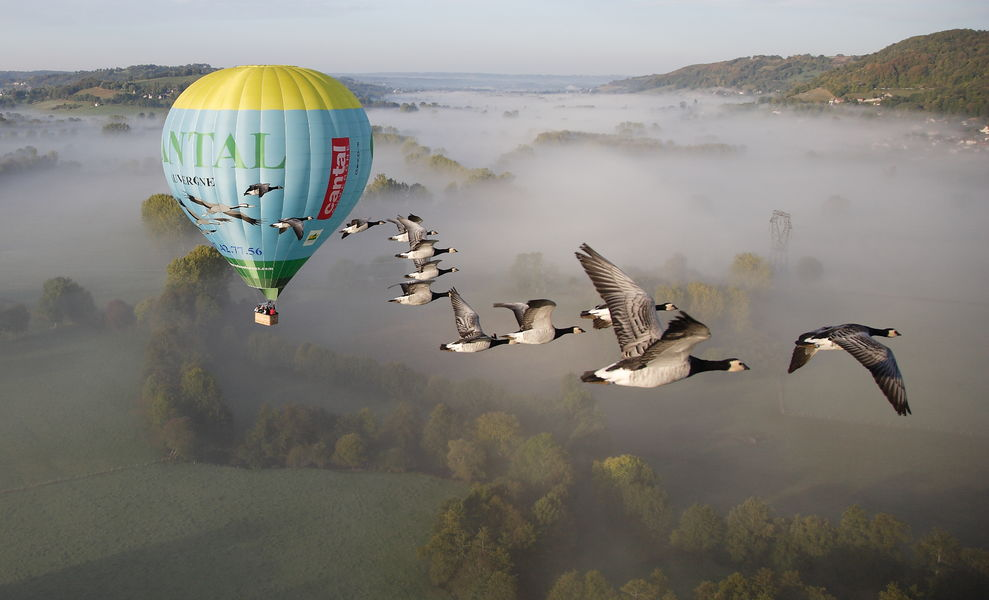 Fly with birds-1