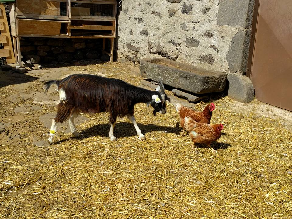 La ferme des Gardelles-10