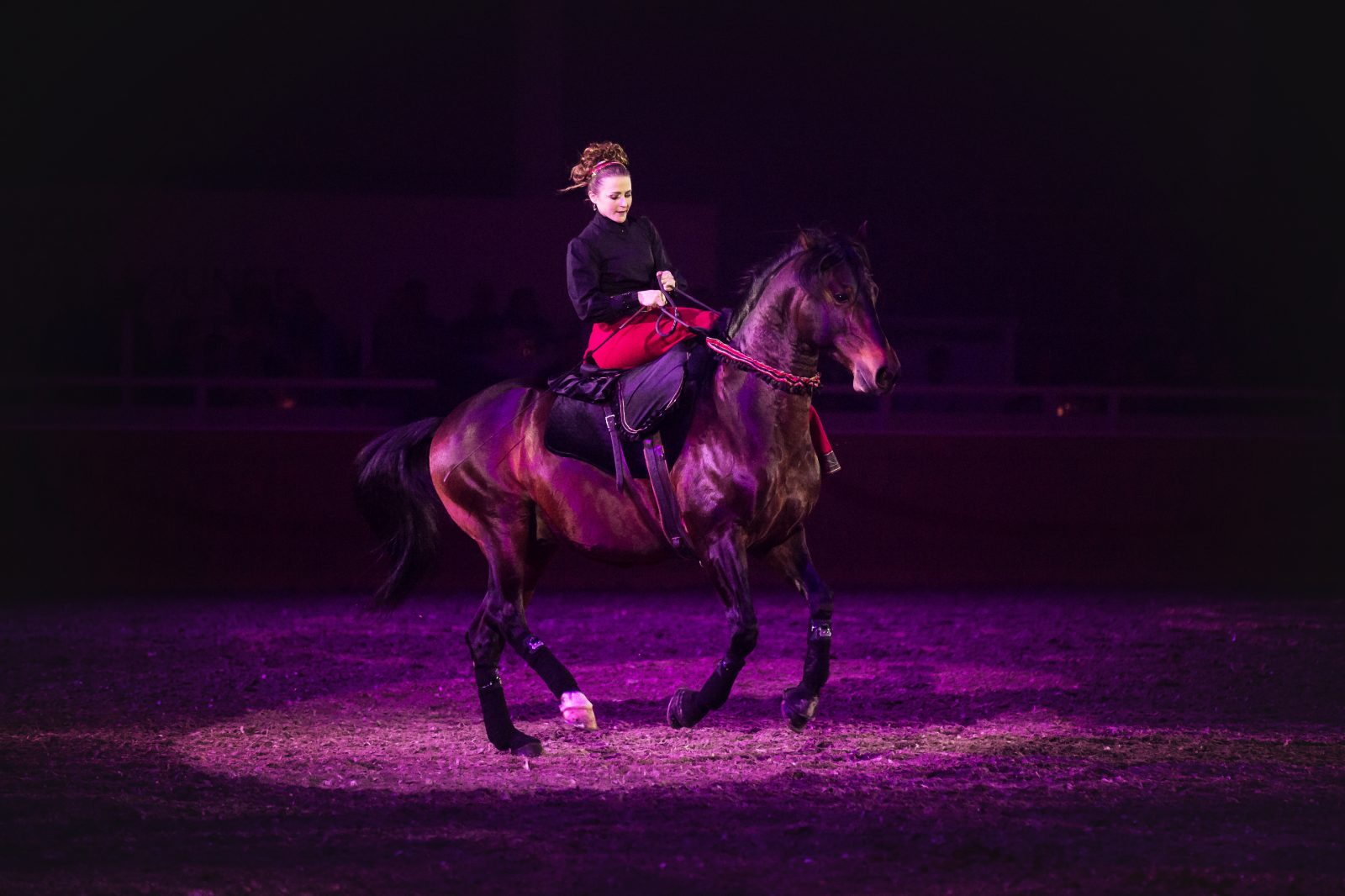 Spectacle cabaret Equestre-1