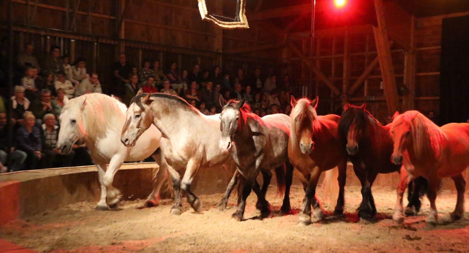 Spectacle cabaret Equestre-2