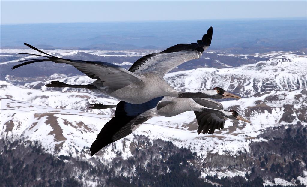 Voler avec les oiseaux-11