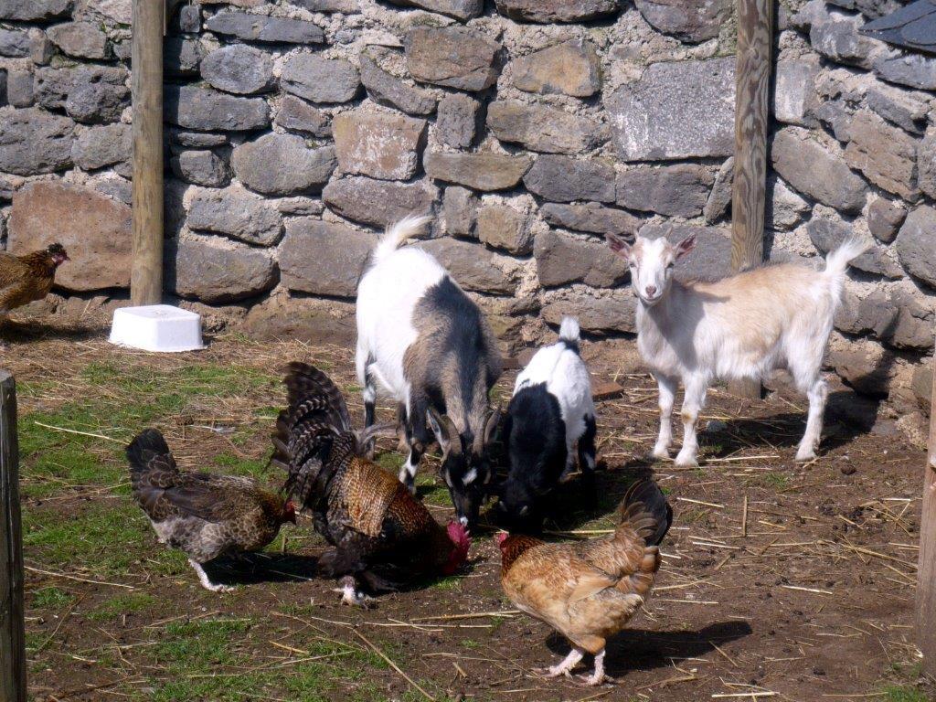 Musée de l'agriculture Auvergnate-27