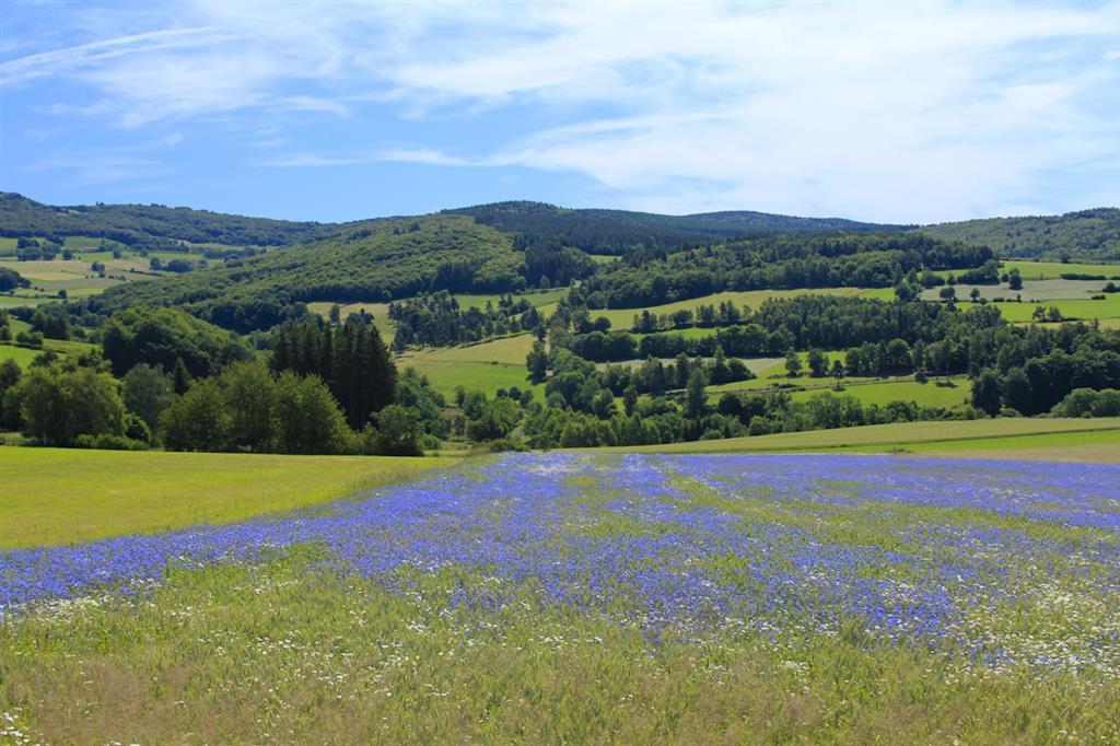 Monts de la Margeride-3