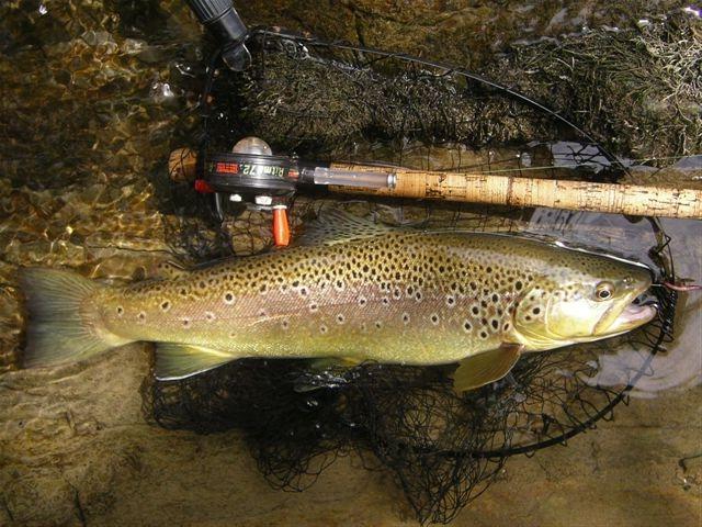 Étang de pêche de Montrozier-3