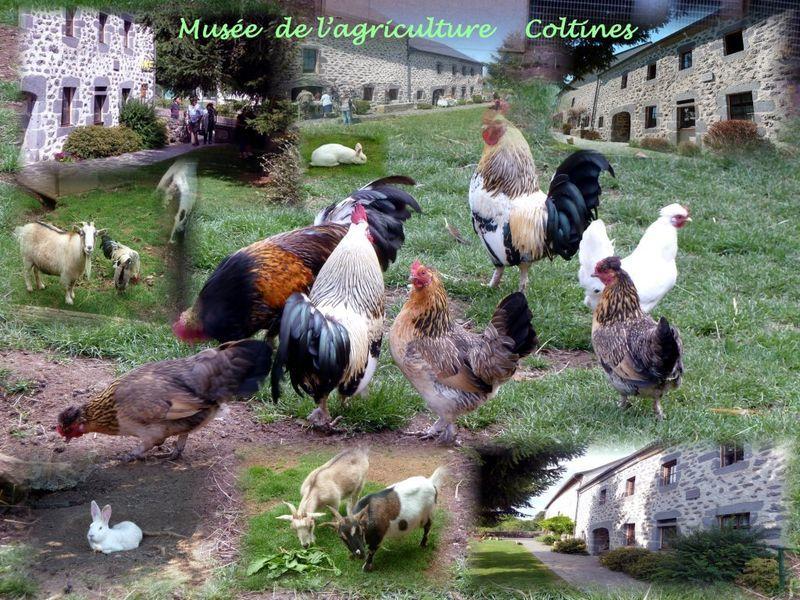Musée de l'agriculture Auvergnate-7
