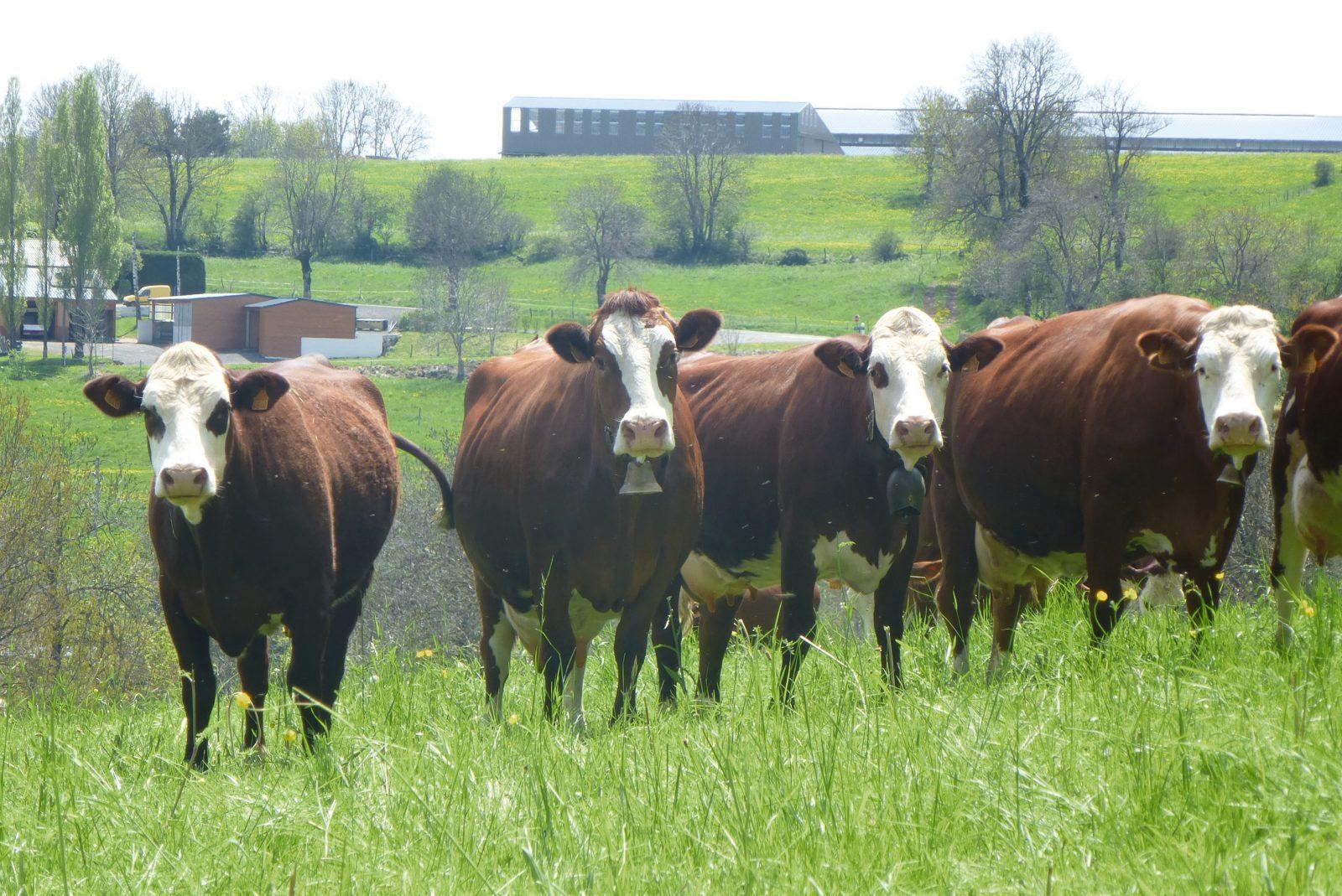 Visite de la ferme du Jarry-7