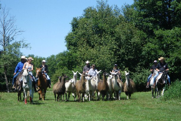 White Mill Ranch-1