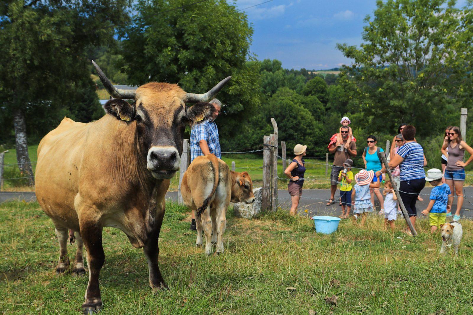 Vivez la ferme en Caldaguès-Aubrac-1