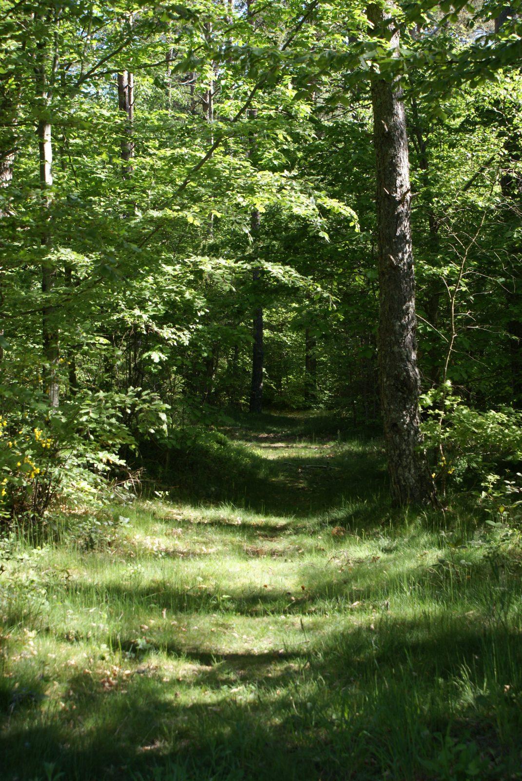Tourbière des Vergnes des Mazes, sentier de découverte-2