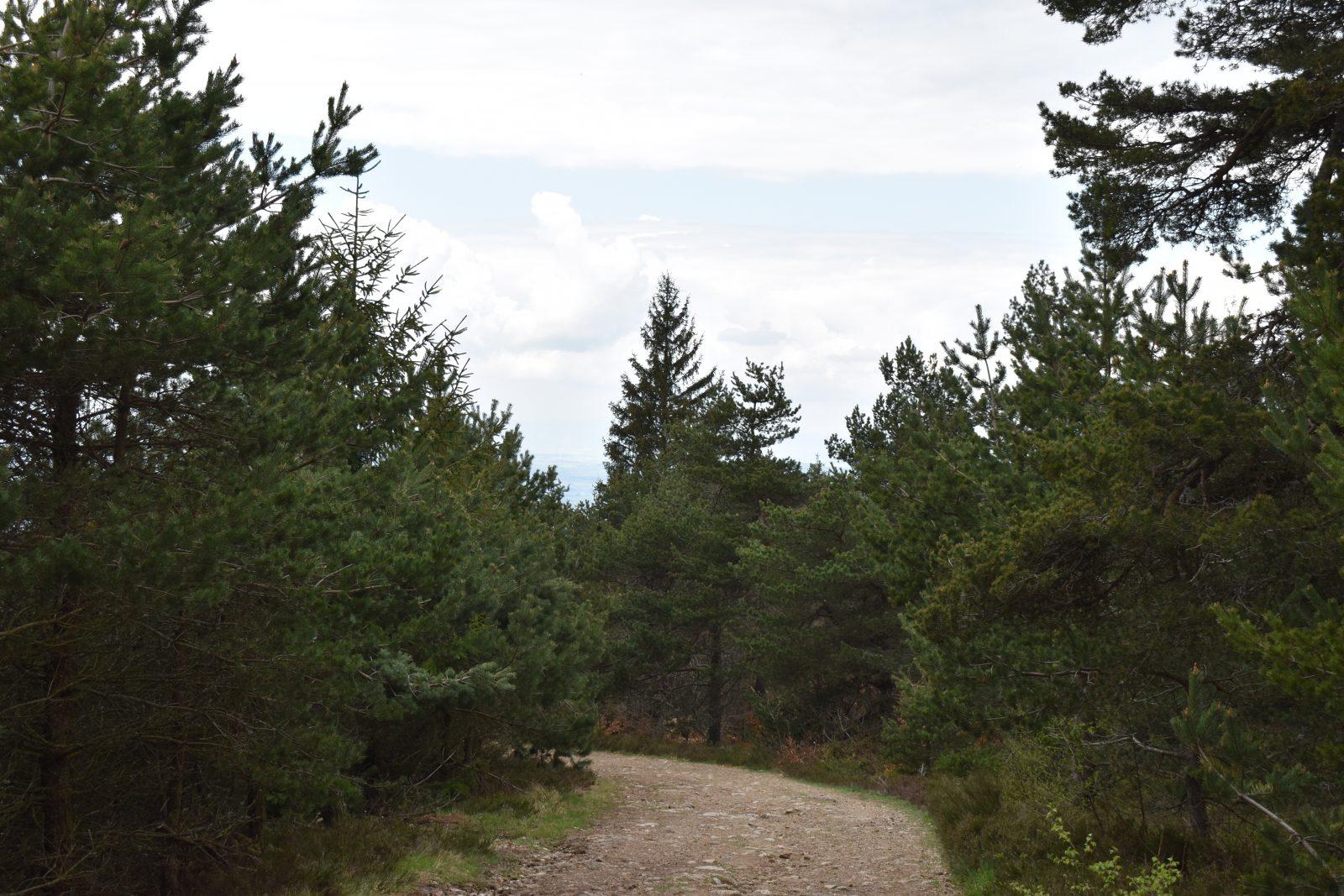 Randonnée Le Chemin des écoliers de Védrines Saint-Loup-1