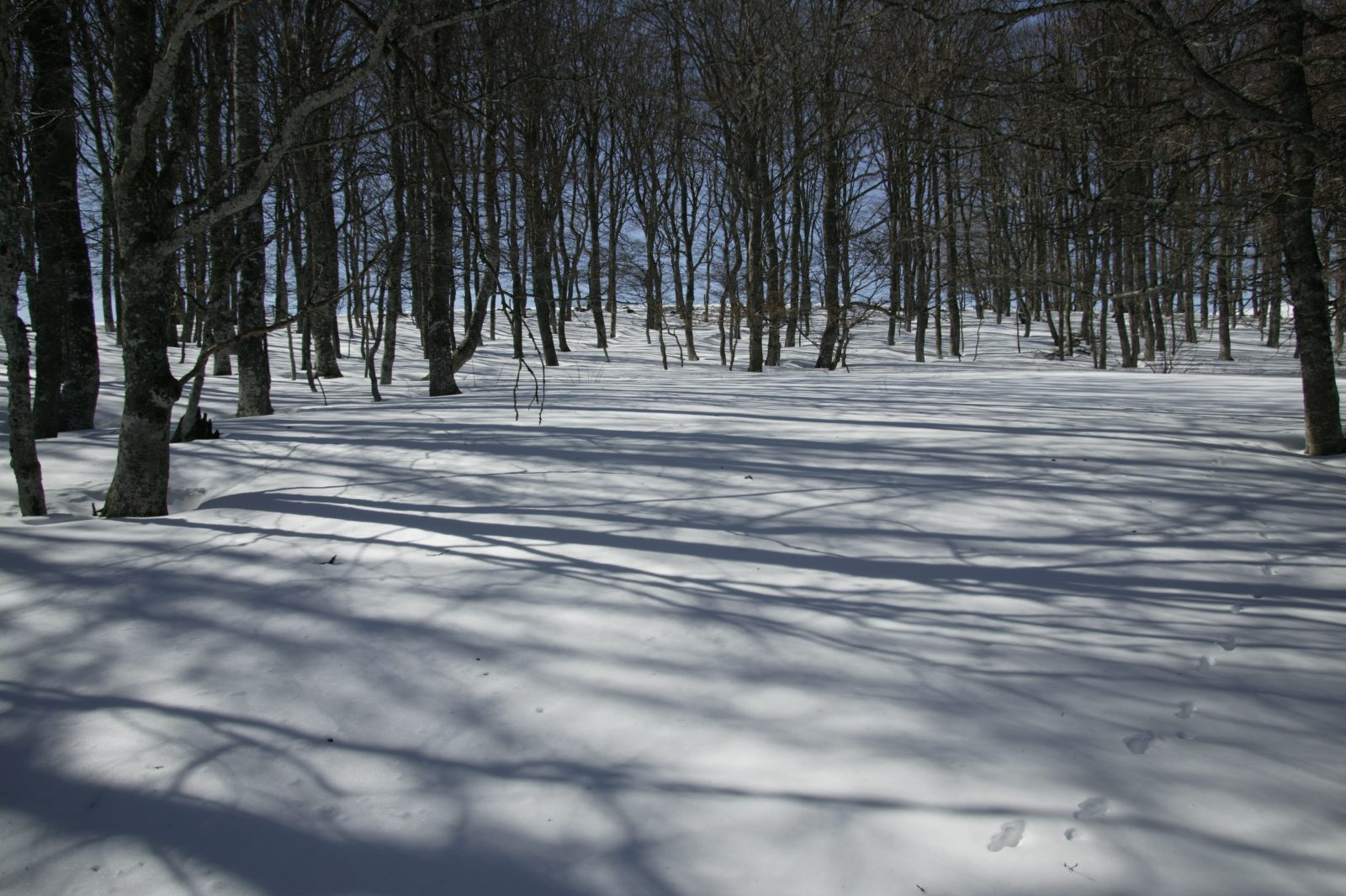 Foyer de ski de Cézens-5