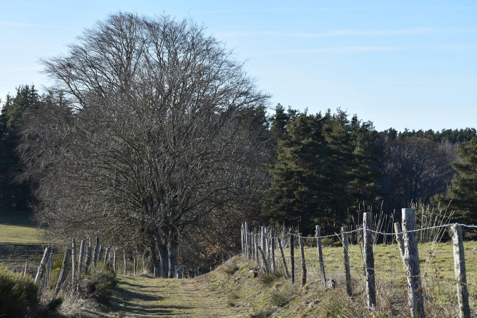 Randonnée Le Chemin des écoliers de Saint-Marc-12