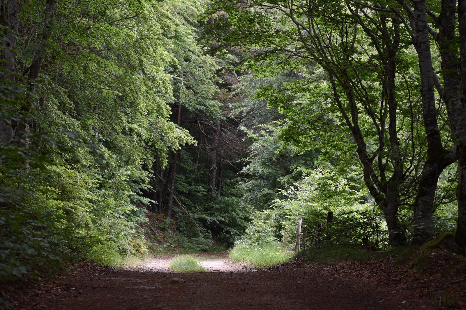 Randonnée La Forêt de la Margeride-1